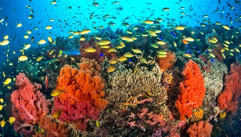 Lots and lots of time is key to coral reef diversity