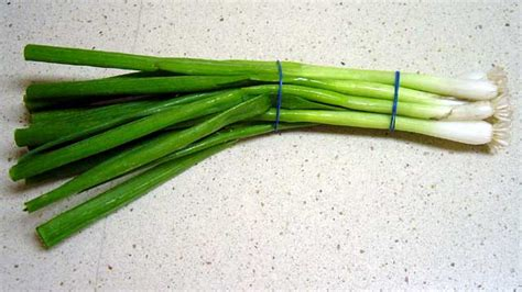 Spring onions: Wiki facts for this cookery ingredient